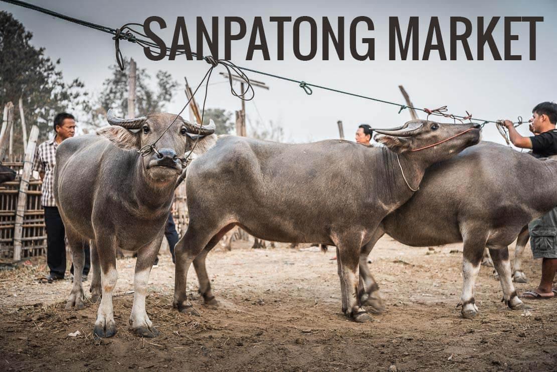 Sanpatong water buffalo market