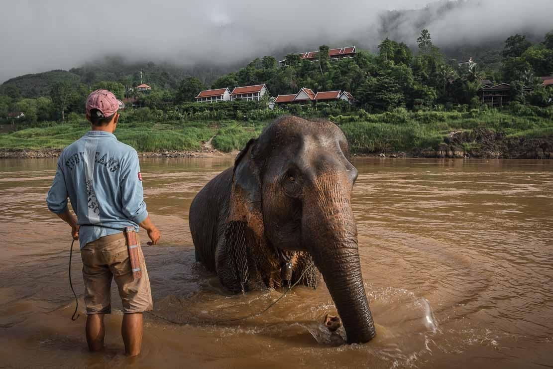 Mekong Elephant Sanctuary in Pakbeng