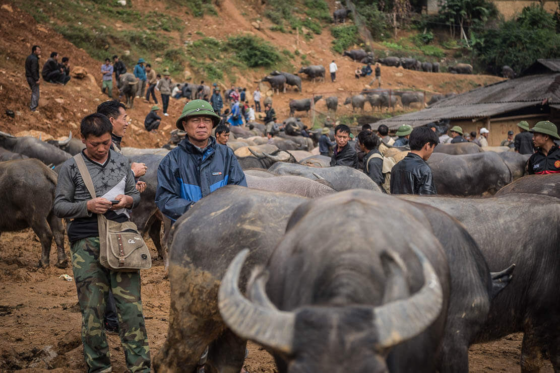 Water buffalo market at Can Cau market in Vietnam