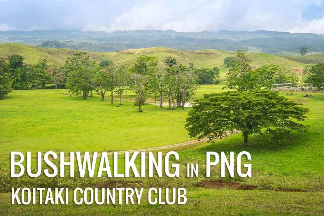 Bushwalking near Koitaki Country Club