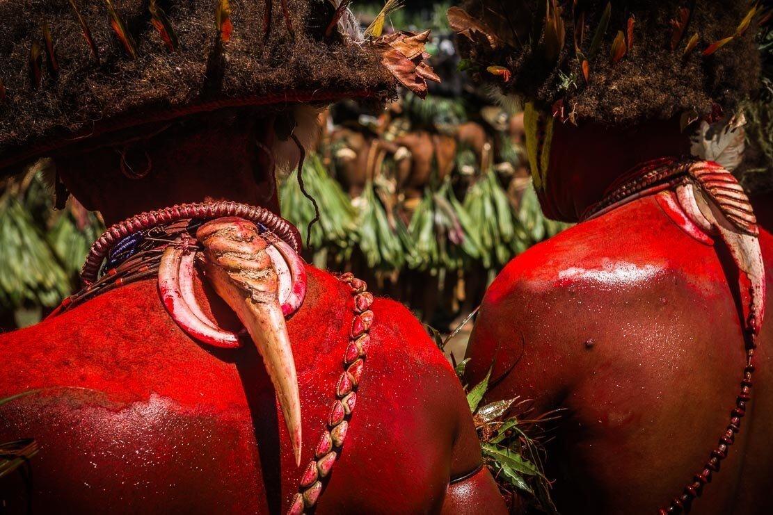 Papua New Guinea festivals: Tari Huli wigmen from Hela province at Enga Cultural Show in Wabag