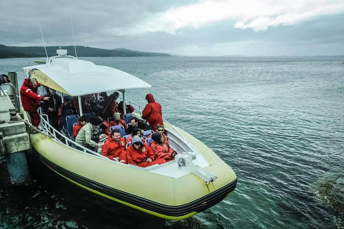 Zodiac type boats by Pennicott Wilderness Journeys in Tasmania