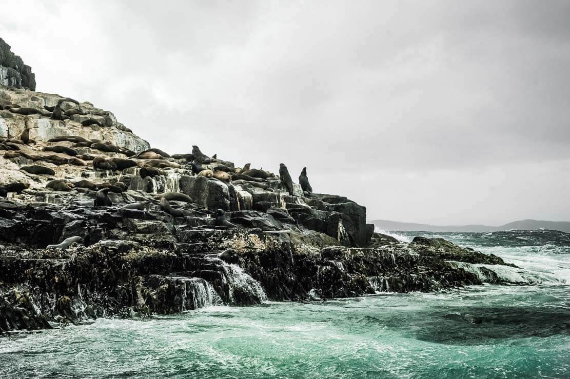 The Friars with a large colony of seals on Bruny Island Cruise in Tasmania