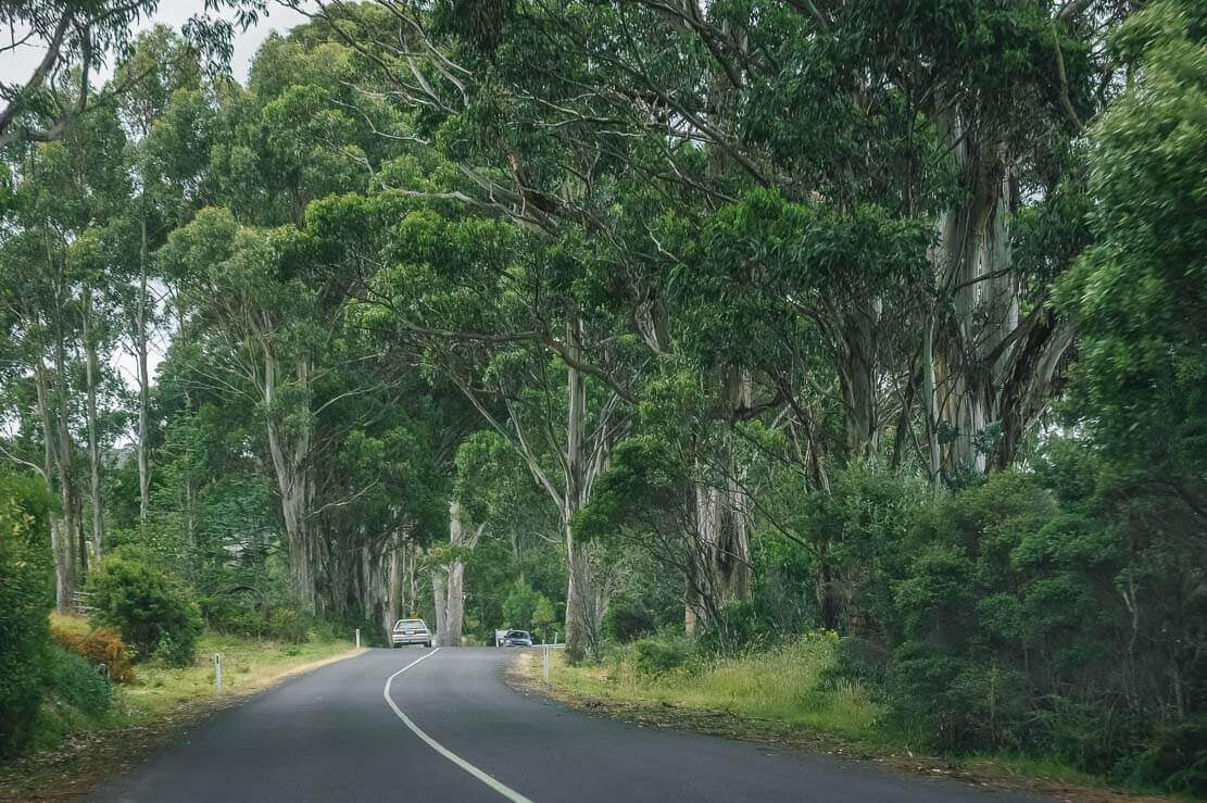 On the road to Cape Bruny Lighthouse on Bruny Island in Tasmania