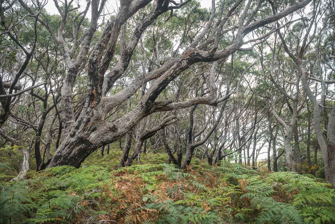Going for a walk at Cloudy Bay on Bruny Island in Tasmania