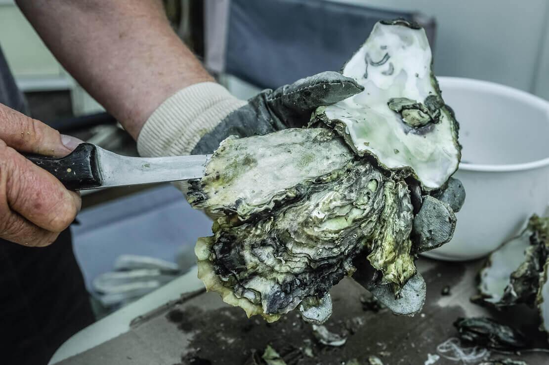 Get Shucked Oyster Bar on Bruny Island in Tasmania