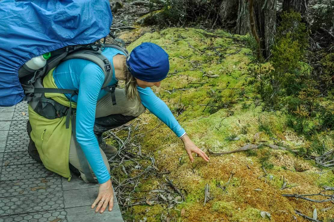 Exploring local flora during our Overland Track in Tasmania