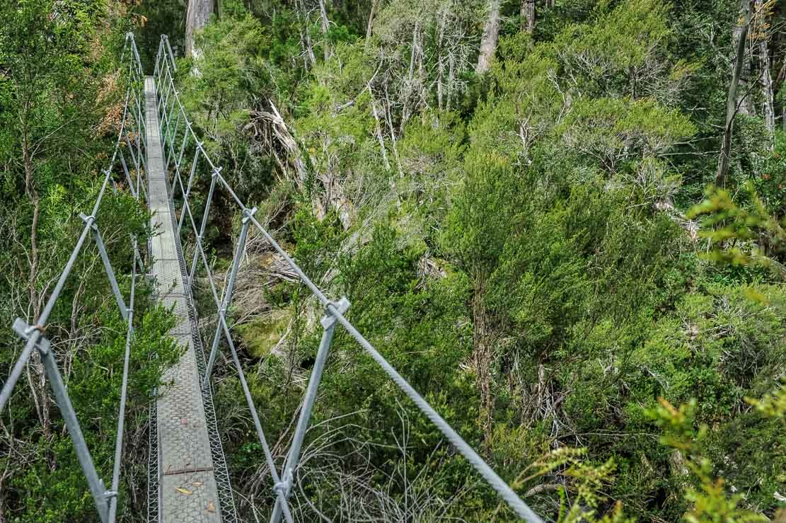 Suspended bridge our way to Pine Valley Hut