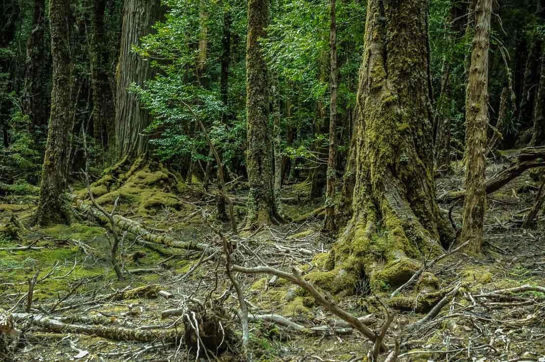 Walking through Pine Valley forest