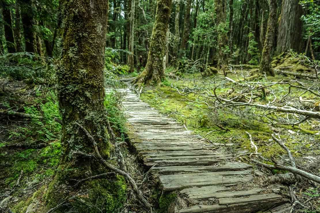 Day 6 of our hiking the Overland Track in Tasmania