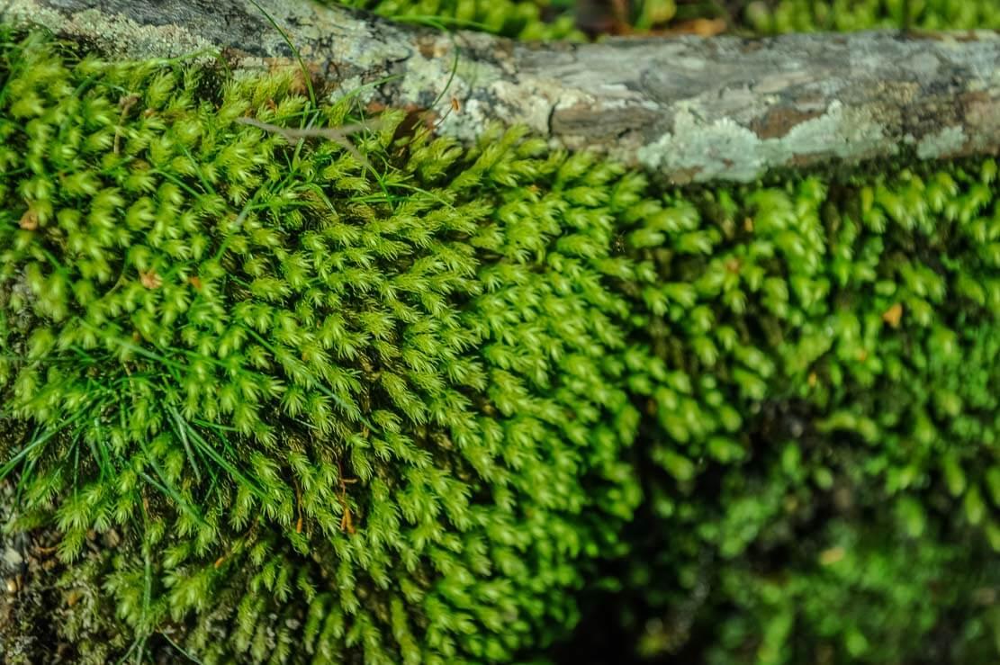 Brightly-green soft moss