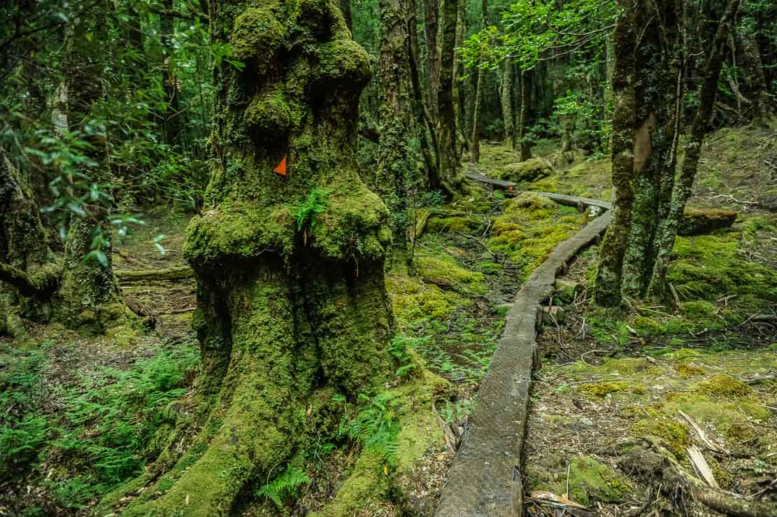 Walking through the bright green moss-covered forest of Pine Valley