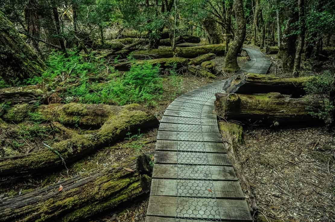 Tolkienesque ancient forest of Pine Valley in Tasmania