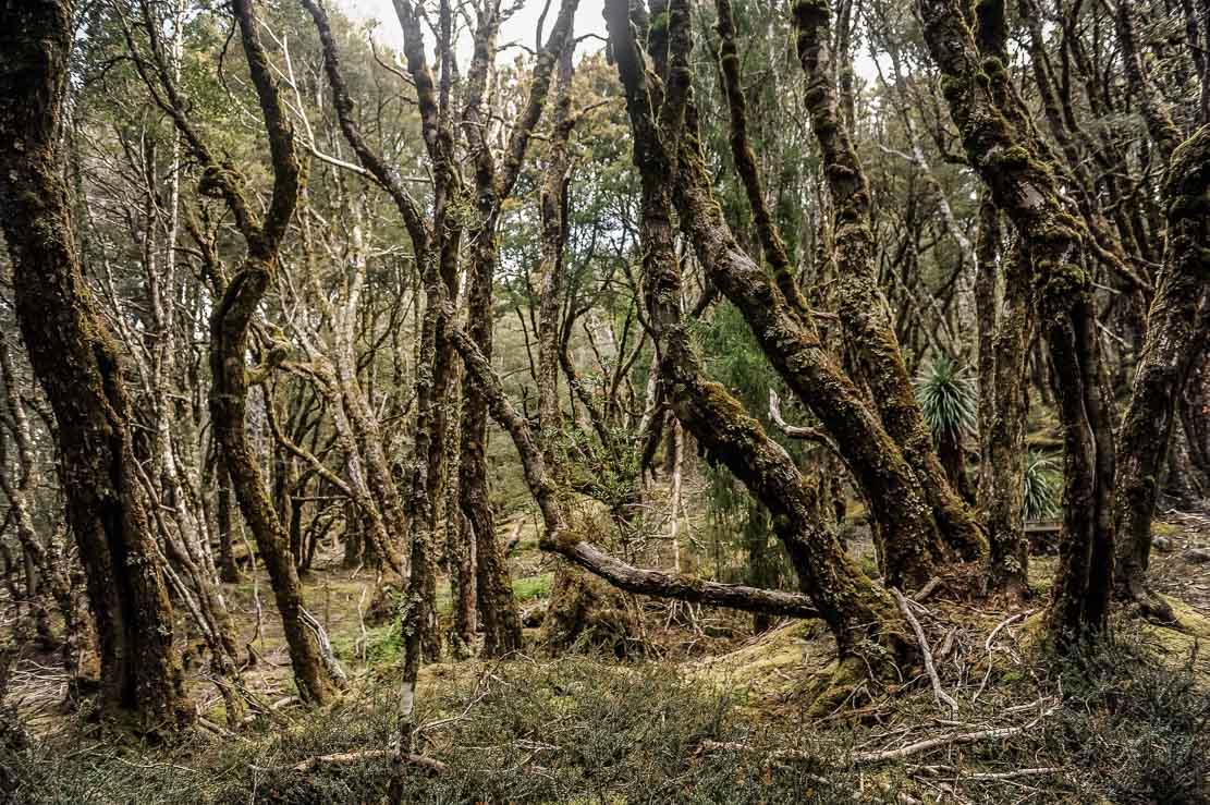 Walking through forests on the way to Kia Ora Hut