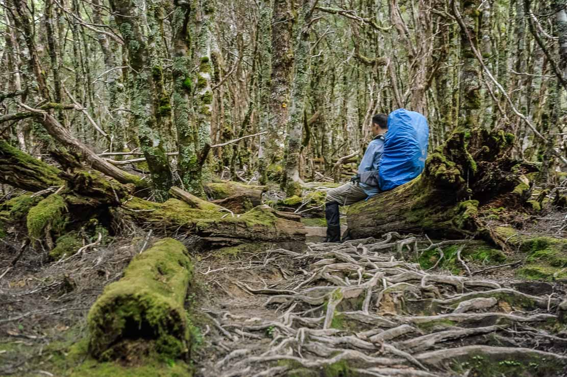 Having a rest in a forest on the way to Kia Ora Hut