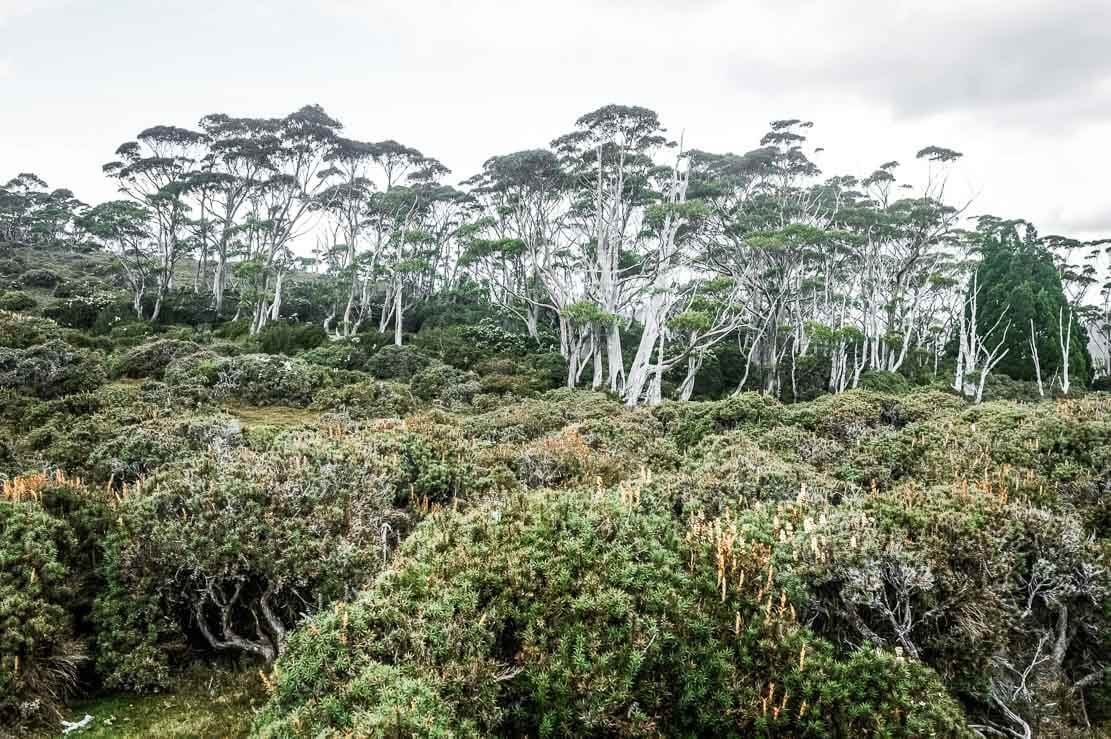 Landscape of Day 4 of our Overland Track in Tasmania