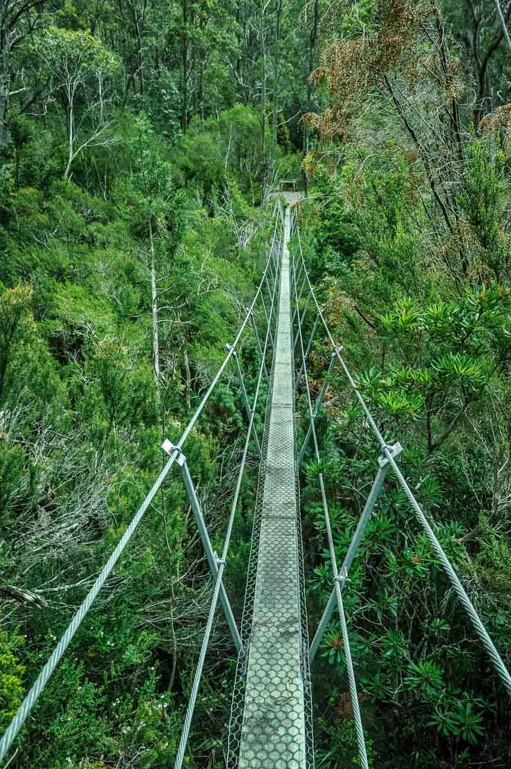 Crossing some suspended bridges on the way from Pine Valley Hut to Narcissus Hut