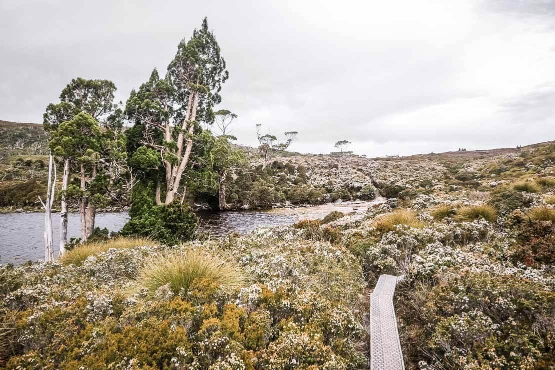 Walking path to Lake Will