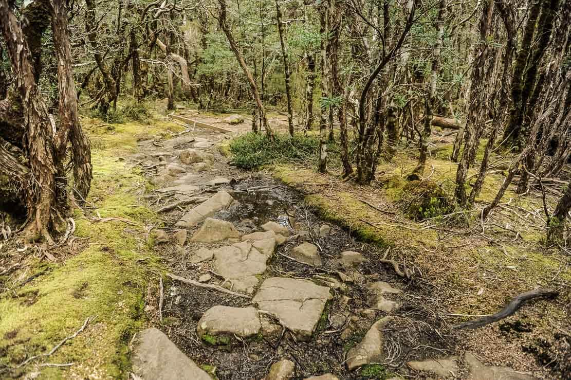 Climbing over knotty roots and mud bogs, and navigating through slippery rocks during Day 3 of our Overland Track in Tasmania
