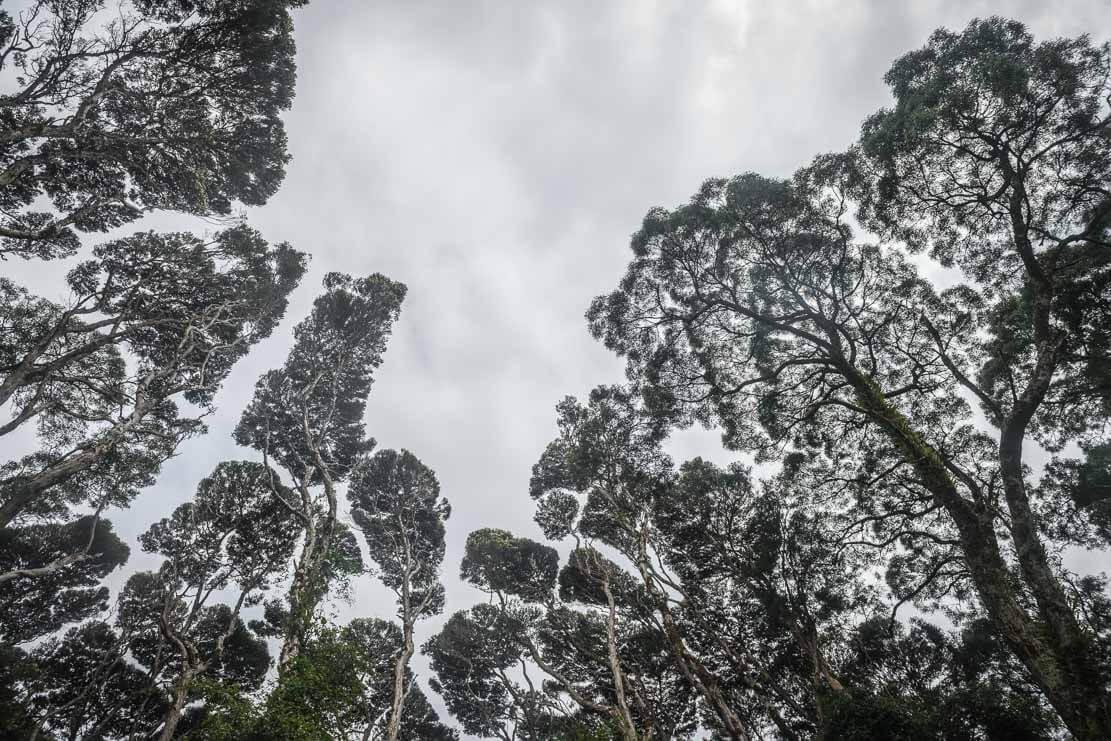 Rainforest of Heritage Landing in Franklin-Gordon Wild Rivers National Park